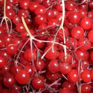 Плоды лекарственных растений