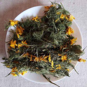 Адонис, цвет с травой (Горицвет весенний, Adonis vernalis) 50 г.