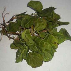 Грушанка (трава)