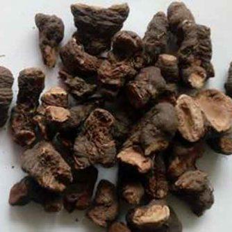 Горец змеиный, раковая шейка (корень) 50 г.