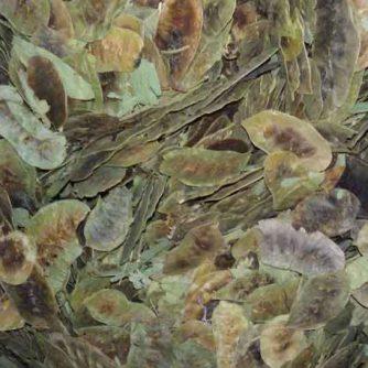 Сенна (листья с плодами) 100 г.