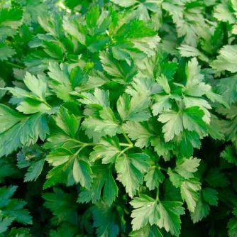 Петрушка листья (порезанные 2-4 мм)